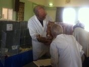 Cats Protection League Cat Show, Little Downham