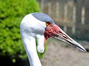 Exmoor Zoo