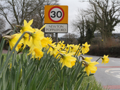 Daffs out in NPop