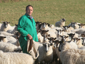 Call to keep dogs on leads near livestock