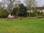 Tree fallen in the byes because of stormy weather