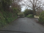 High winds in Devon bring trees down.