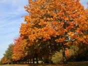 Autumnal Photos