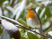 Winter Photographs of Hitchin