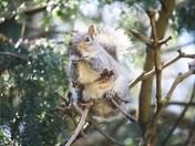 Springtime Squirrels