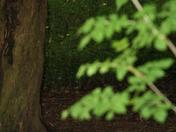 Witchcraft in Worlebury Woods