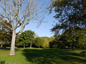 Sun and shadows of Clarence Park in the Autumn.