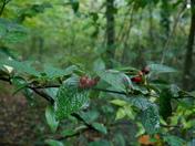 An Autumn walk in a wet Worlebury Woods.
