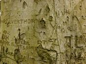 A Woodland History - Weston Woods.