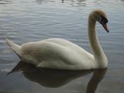 Wonder Fowl Backwell Lake.