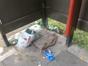 Should have gone to Specsavers? 4 days gone and litter still there.