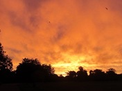 Golden sky over Hornchurch