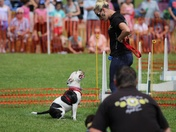 Happy hounds dog show