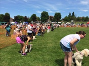 Havering Happy Hounds Dog Show