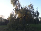 Trees down in Hylands Park Hornchurch