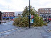Large Tree blown down in Hornchurch High Street