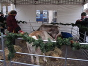 rudolph and comet the reindeer in romford market