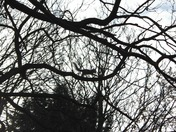 Silhouette Squirrel Scampering through the trees in Raphael's park