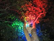 Colour Trees at Night in West Ham Lane Stratford