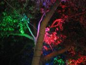 Colour Trees at Night in West Ham Lane, Stratford
