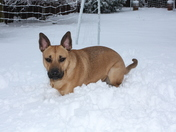 Snowy days in Chelsfield