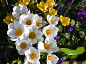 Spring is sprung in Redbridge!