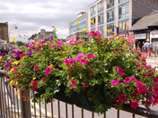 Floral displays in Ilford Town Centre