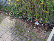 Litter and spring blossom in Aldborough Hatch