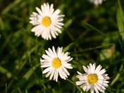 More garden flowers