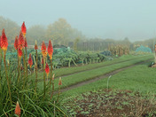 The alllotment site on a foggy Sunday morning