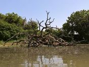 A Fallen Tree On Sutton Shore