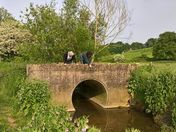Looking for Sticklebacks Rosemary Bridge