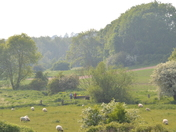 Across the Meadows to Tuddenham Bridge