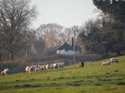 Bridge Meadow Playford