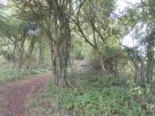 A walk through Swilltub Lane