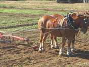 Extra shots of The Suffolk Horse Ploughing Match