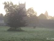 Misty Morning Views