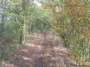 An Autumn walk in the country.