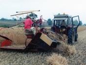 Harvest Past
