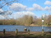 Needham lakes