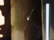 An Autumn spider's web