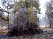 Frost in the woods