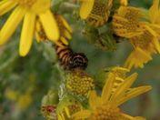 Watching caterpillar