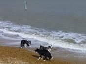 Doggy Paddle!