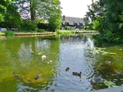Duck and Ducklings at Flatford Mill