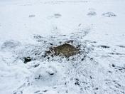 Soil burst, a mole hill eruption in the Snow!