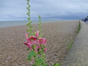 Stisted's day trip to Snape, Aldeburgh and Thorpeness