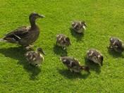 Formation feeding