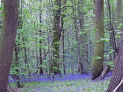 Bluebell Haze