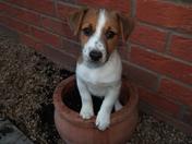 A helpful little gardener!!!